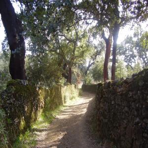Sendero Hinojales – Camino de la Víbora