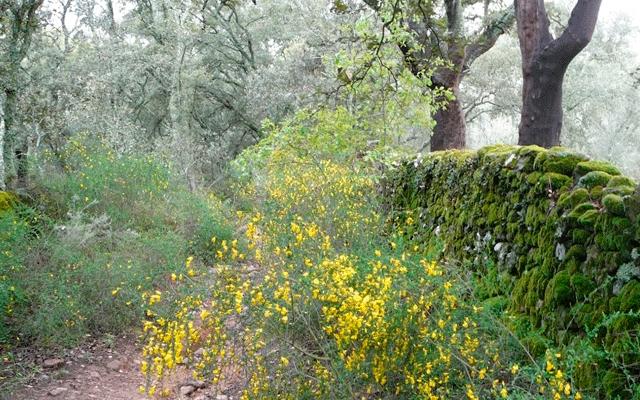 Ruta Cortegana – Almonaster la Real Casas rurales en la sierra de Huelva 01