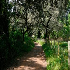 Sendero Santa Ana la Real – Riscos de Levante