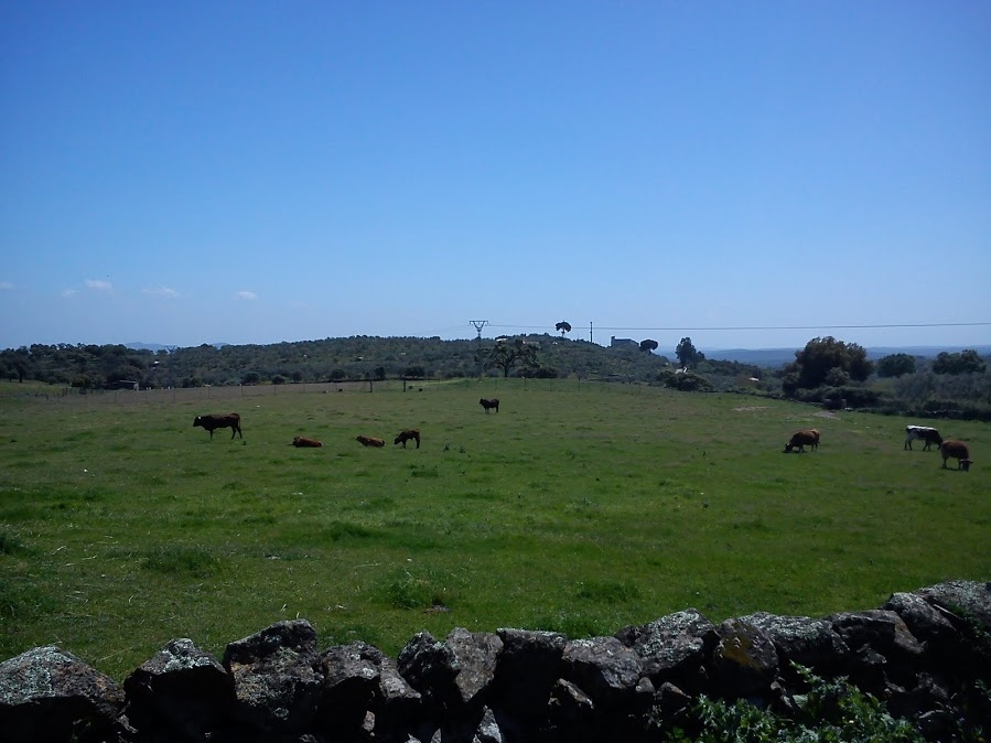Sendero Santa Olalla del Cala – Mina Teuler Alquiler de casas rurales en Huelva 09