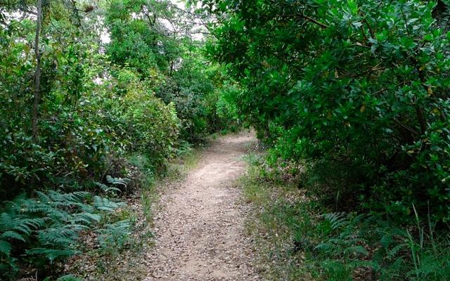 Sendero Fuenteheridos – Castaño del Robledo casa rural Sierra de Huelva 01