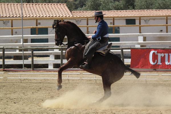 Fegar Feria caballos Aroche Sierra de Huelva