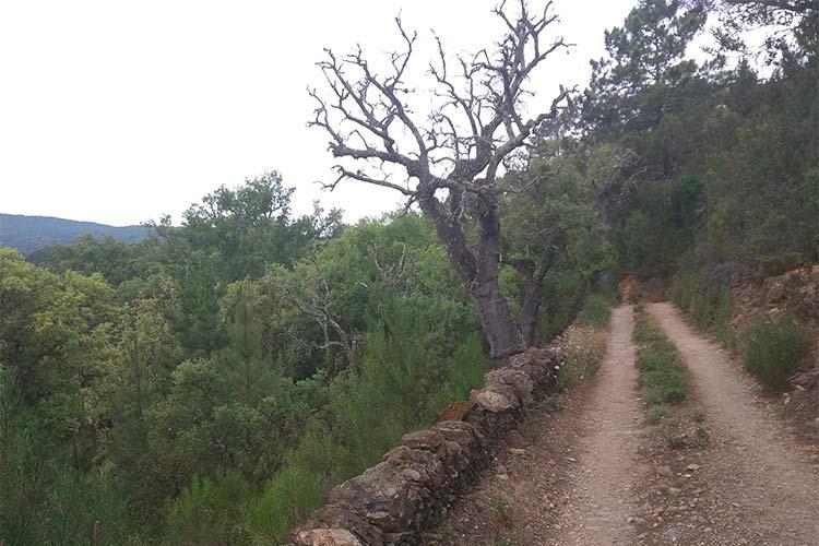 Sendero Valdelarco Navahermosa Sierra de Aracena