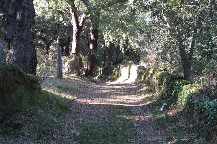 ruta de Senderismo por la dehesa de la sierra de aracena