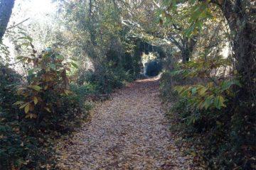 senderismo entre castaños sierra de aracena