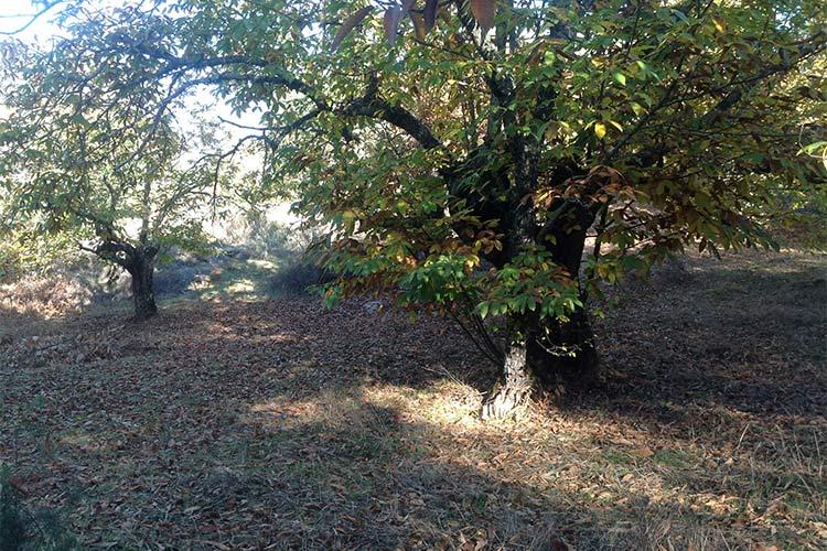 sendero castaños sierra de aracena