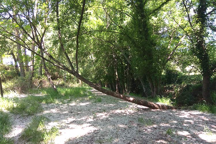 primavera en la Sierra de Aracena senderismo