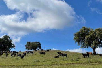 Sendero Aracena Monte San Miguel dehesa